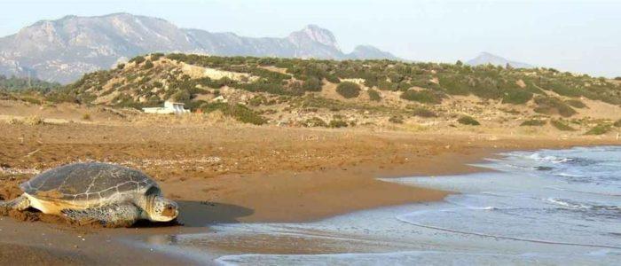 Familien- und Strandurlaub Nordzypern 1